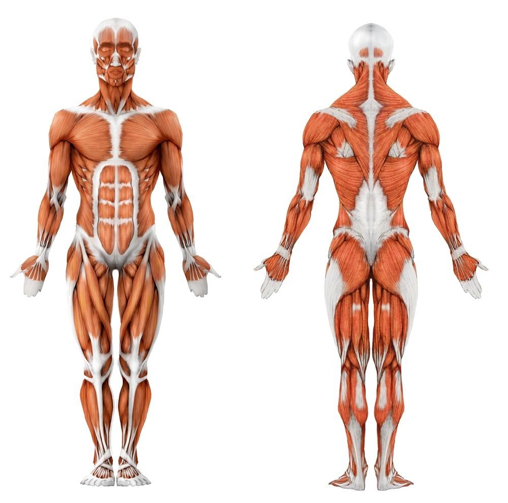 анатомия человека скачать программу - фото 9