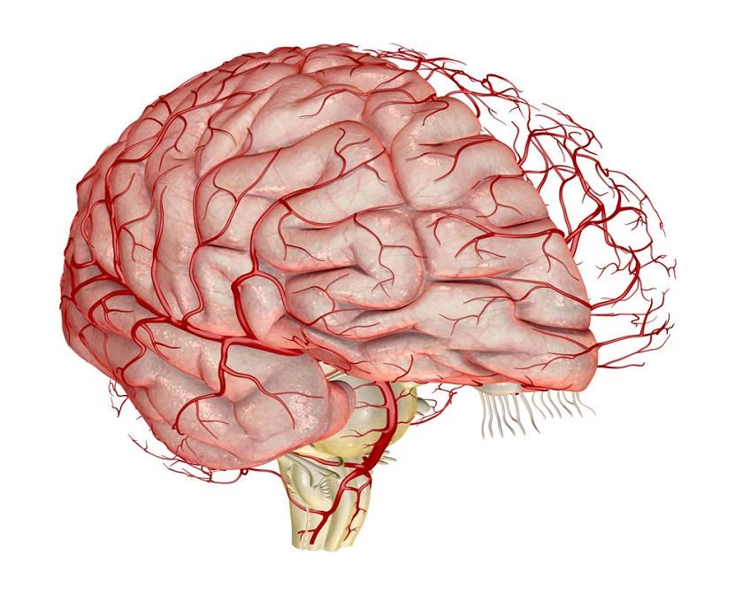 фотографии анатомия человека