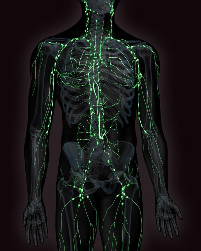 анатомия картинки