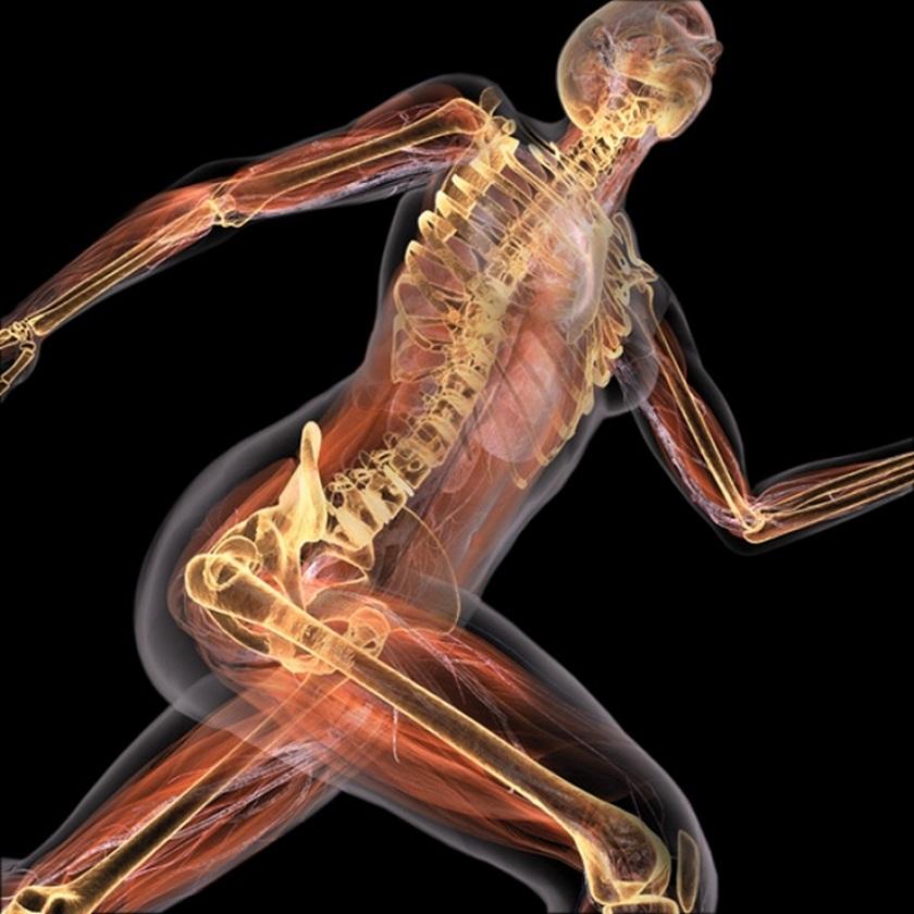 анатомия человека в картинках