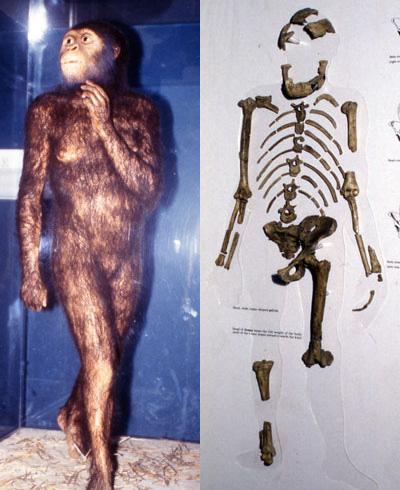 Эволюционисты больше не любят Люси?