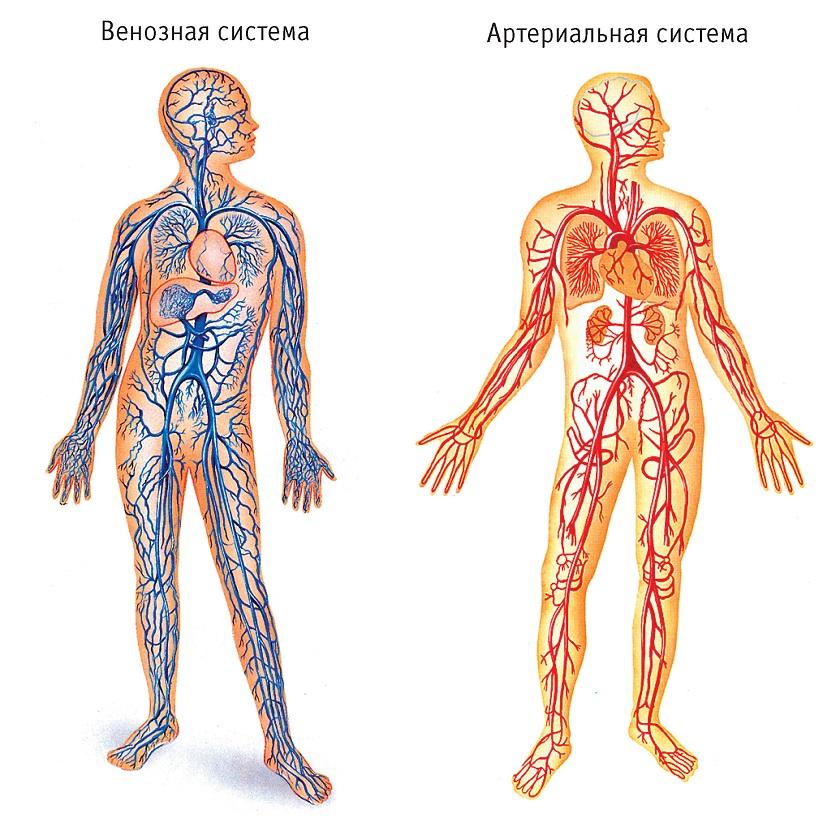 анатомия человека скачать программу