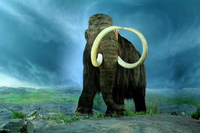 Еще один шерстистый мамонт, возраст которого составляет 5725 лет, обнаружен на острове святого Павла на Аляске