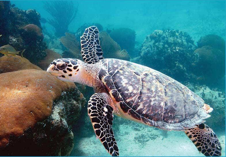 Фото морской черепахи