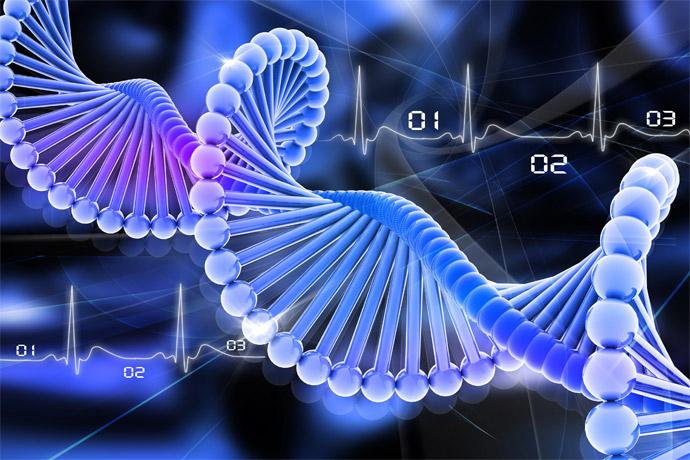 98% сходство между ДНК шимпанзе и человека?