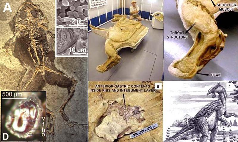 Мягкие ткани динозавра