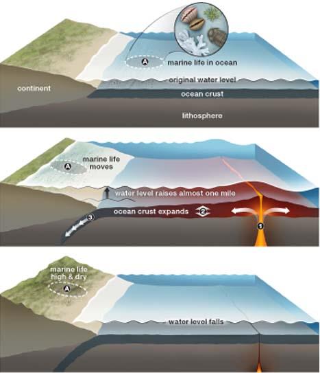 Морская жизнь первоначально существует в океане (верхняя схема).  Земная кора.