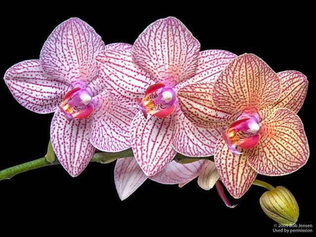 орхидеи  и названия