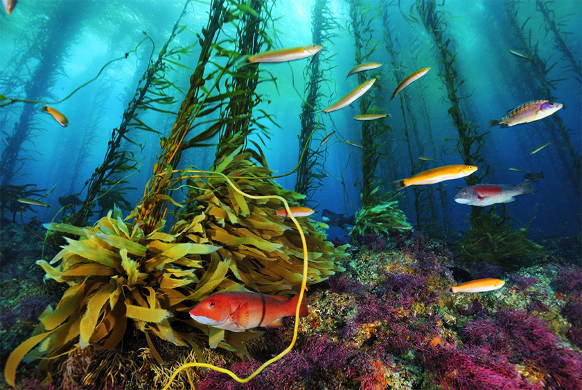 морской калан