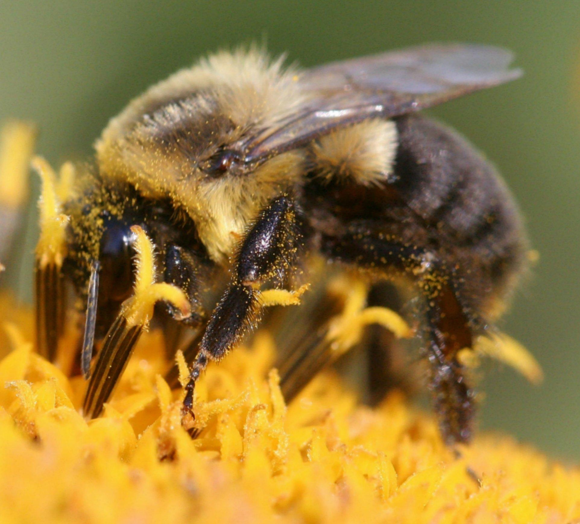 Пчелиный укус в любовном гнездышке 22 фотография