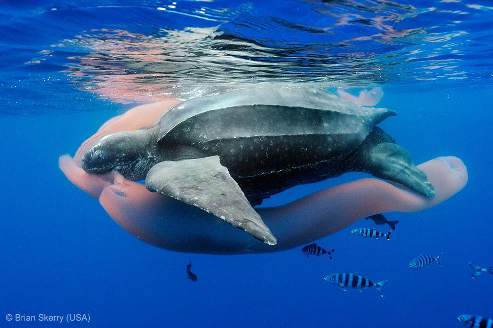 что едят морские черепахи