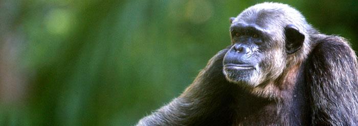 Наука опровергла лучший аргумент эволюции