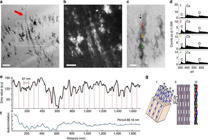 электронные микрофотографии, на которых четко видны волокна