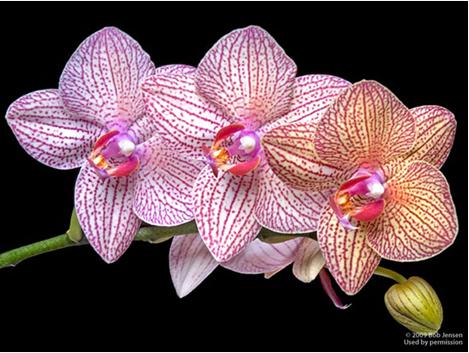 Орхидея доклад краткое содержание 6964