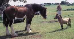 Неэволюция лошади