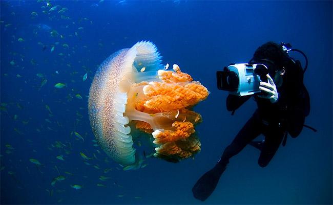 медуза скачать игру - фото 3