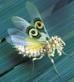 Африканский цветочный богомол