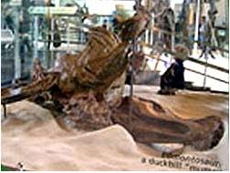Мумия гадрозавра