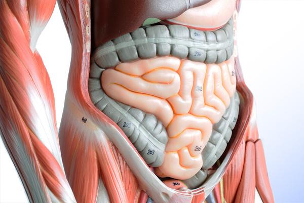 фото пищеварительного тракта