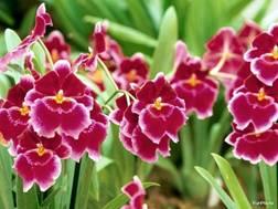 Орхидеи – свидетельство Создателя.