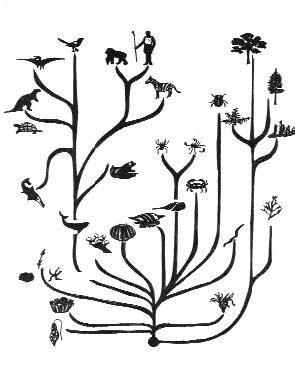 Мнение эволюциониста: «Обманывать учеников, чтобы они поверили в эволюцию, – это нормально». Oshibki_3