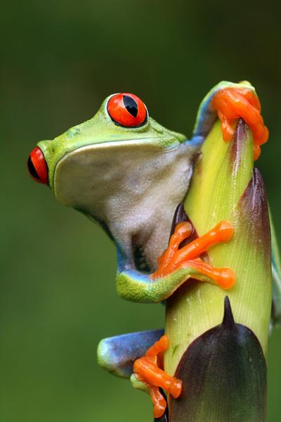 Adult amphibian