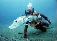 ледяная рыба, в крови которой отсутствуют красные кровяные тельца или гемоглобин