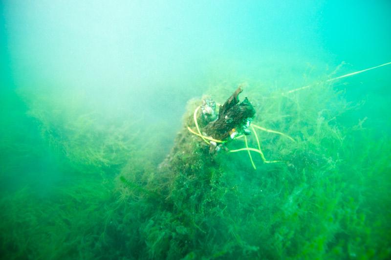 underwaterforest.jpg